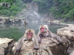 Snow Monkey Resorts Tours