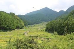 Yotsuya no Semmaida