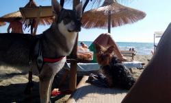 Fuorirotta Beach