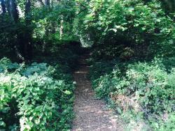 The Wood and Richard Jefferies Bird Sanctuary