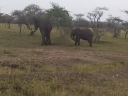 Nature's Land Safaris - Day Tours