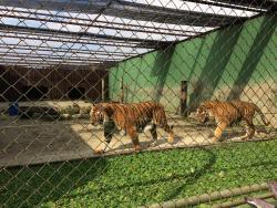 Complexo Ambiental Cyro Gevaerd Zoologico