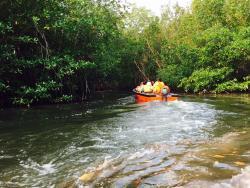 Bintan Mangrove Discovery - Day Tour