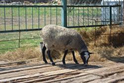 Ostrich Farm Ekzotik