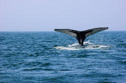Ocean Explorations  Whale Cruises