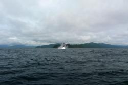 Posada del Mar Bahía Solano