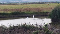 Cliffe Pools