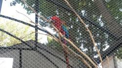 Yerevan Zoo