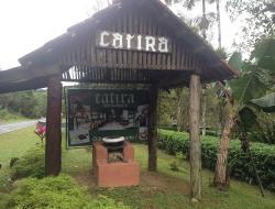 Catira