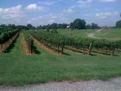Stony Knoll Vineyards