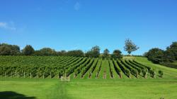 Lily Farm Vineyard