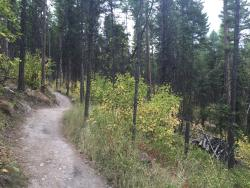 The Whitefish Trail
