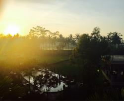 Tranquility, amazing area in the middle of rice paddies 10 mins out of central ubud. Great facil