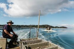 Mahurangi Oysters Limited