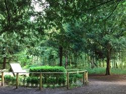 Folehaveskoven