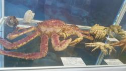 Marine Fauna Museum
