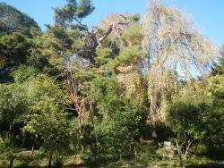 Koshigaya Aritaki Botanical Garden