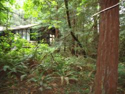 Muir Woods Trading Co