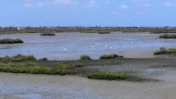 Natural Park of Cadiz Bay