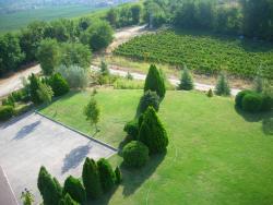 Pogled sa kule na vinograde