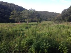 Koajiro Forest