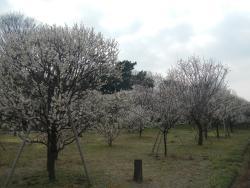 Koshigaya Bairin Park