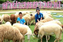Hug You Sheep Farm