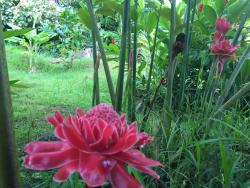 Halawa Tropical Flower Farm
