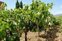 Cooperative Winery of Nemea