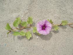 Pantai Irama Bachok
