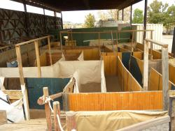 Staheli Family Corn Maze