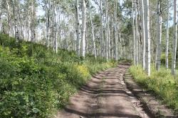 Skyline Drive (Great Western Trail)