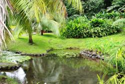 The Water Gardens of  Vaipahi