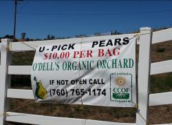 O'Dell's Organic Orchard
