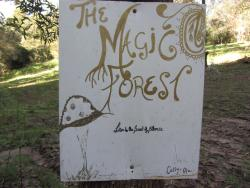 visit the magic forest