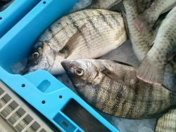 Lonja Pesquera Los Abrigos