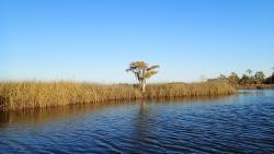 Yellow River Marsh Aquatic Preserve