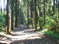 箱根旧石铺路