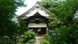 Saiyoji Teple