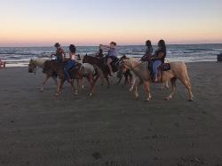 Galveston Island Horse & Pony Rides