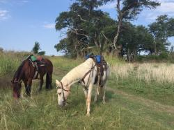 Texas Trail Riding Co.