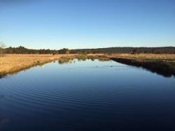 Panboola Wetlands