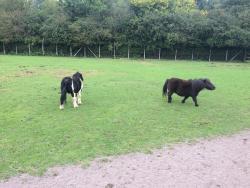 Tannaghmore Farm and Gardens