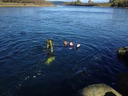 Beaver Aquatics