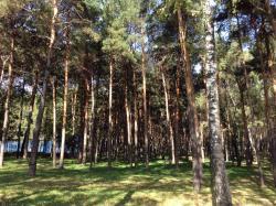Park Sosenki
