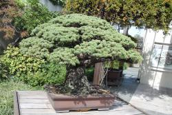 National Bonsai & Penjing Museum