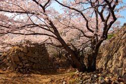 Seosaengpo Japanese Fortress
