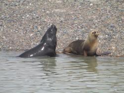 Bordes de Patagonia, turismo en una estancia a orillas del mar.