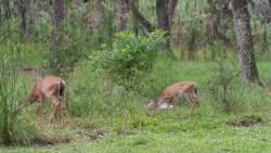 Split Oak Forest Mitigation Park