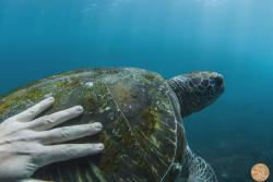 Cook Island Aquatic Reserve